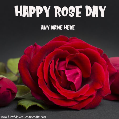Happy Rose Day 2020 Greetings with Name